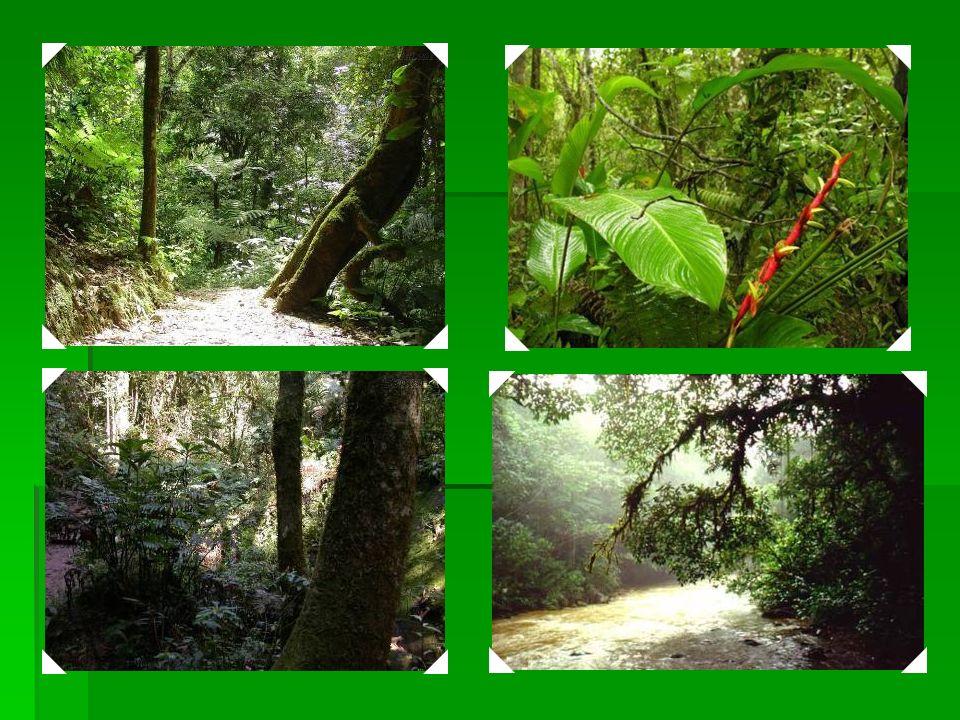 1999 Reservas de Floresta Atlântica da Costa do Descobrimento – localizada nos Estados do Bahia e do Espírito Santo, consiste em oito áreas separadas