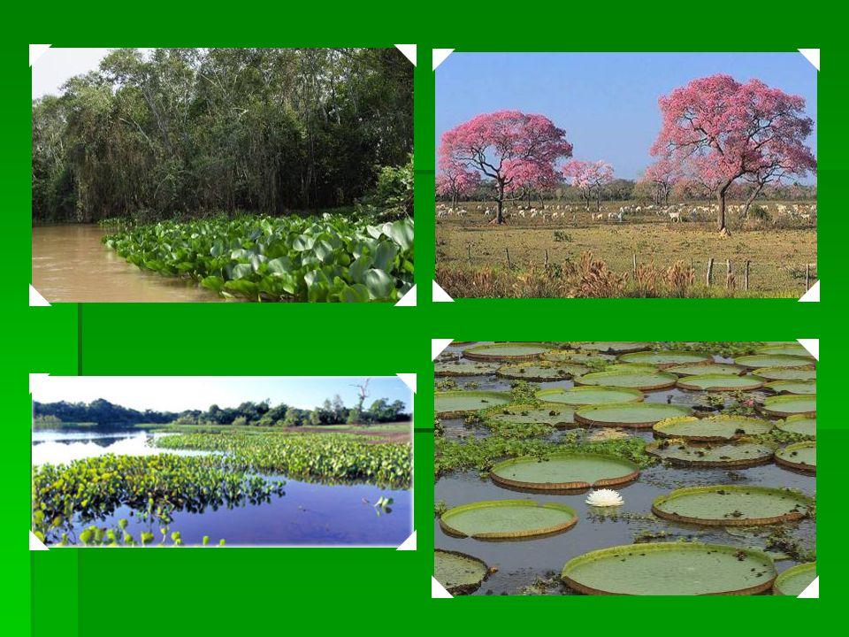 2000 Complexo de Conservação do Pantanal - Consiste em um grupo de quatro áreas protegidas, num total de 187.818 ha. Localizado no sudoeste do estado