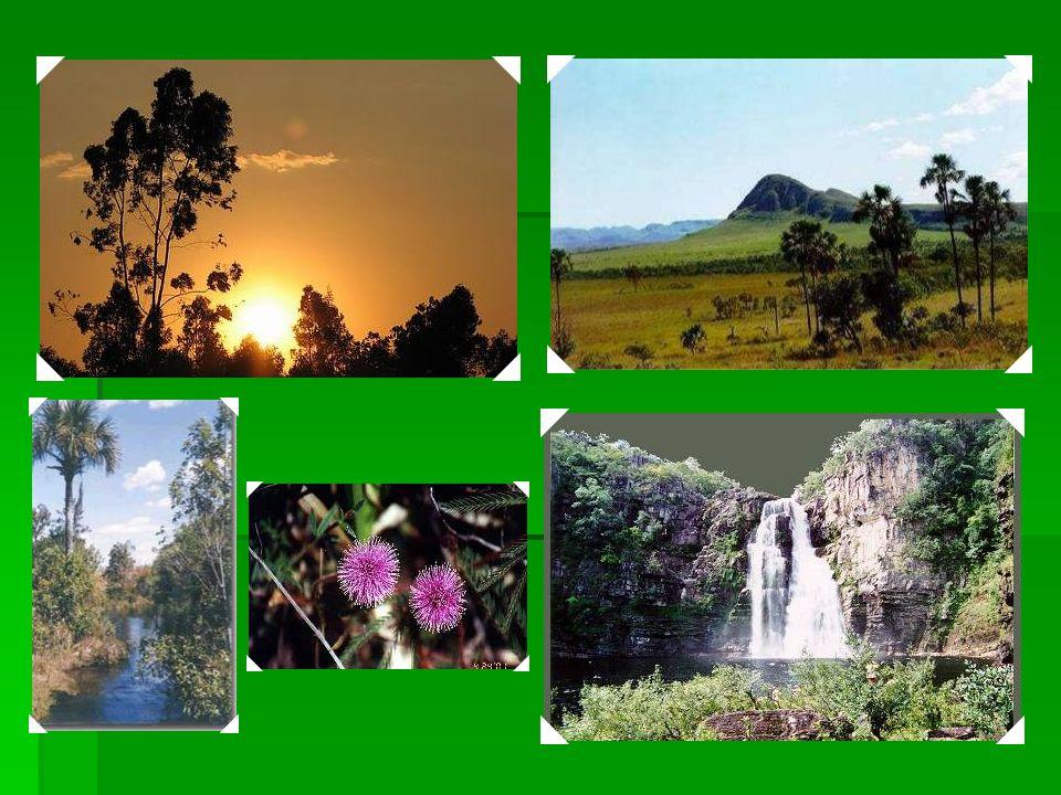 2001 Áreas Protegidas de Cerrado: Chapada dos Veadeiros e Parque Nacional das Emas : os dois sítios possuem flora, fauna e habitats que caracterizam o