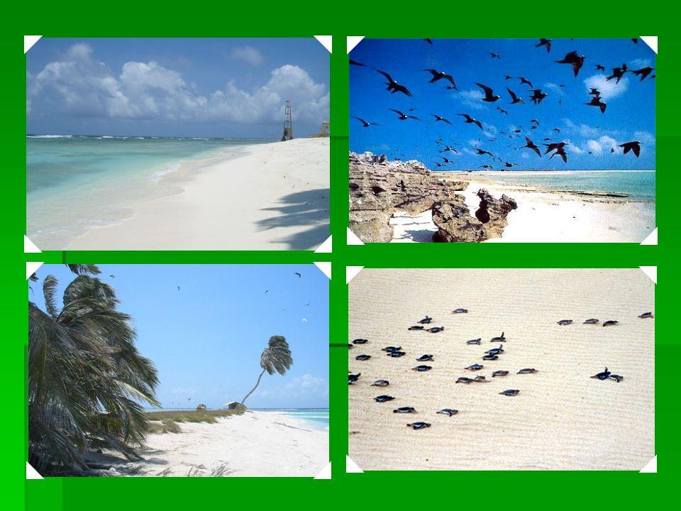 2001 Ilhas Atlânticas Brasileiras: Reservas de Fernando de Noronha e Atol das Rocas: representam grande proporção de ilhas do Atlântico Sul e suas ric