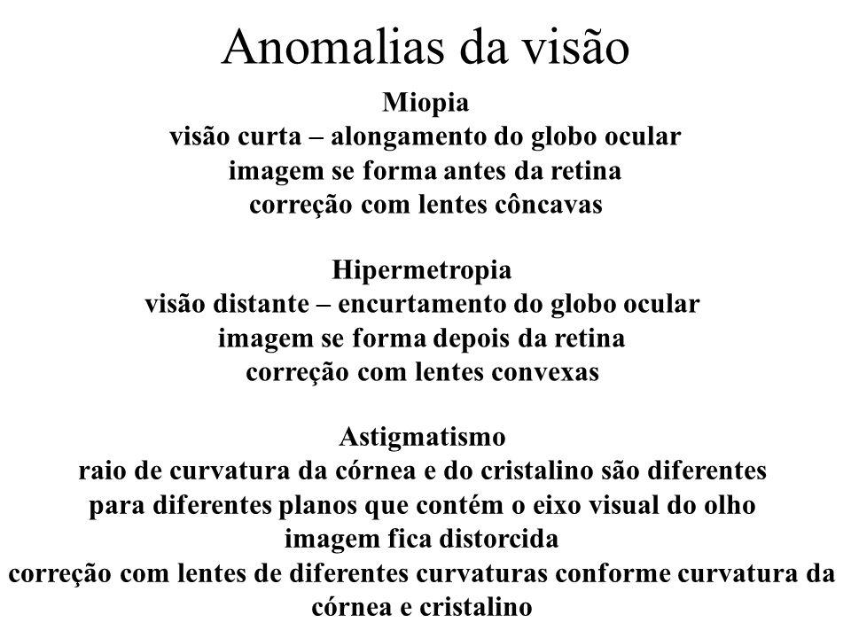 Anomalias da visão Miopia visão curta – alongamento do globo ocular imagem se forma antes da retina correção com lentes côncavas Hipermetropia visão d