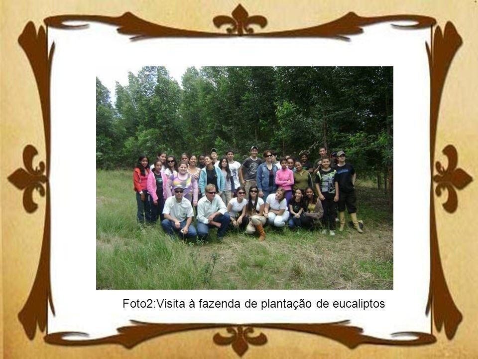 Foto2:Visita à fazenda de plantação de eucaliptos