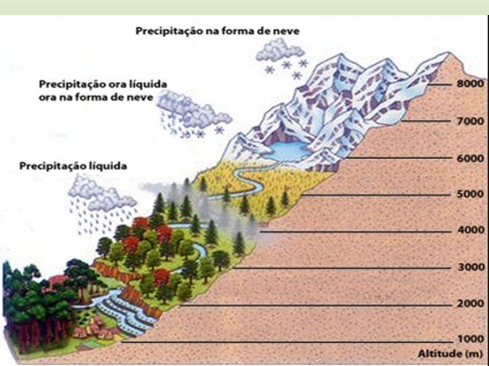 Estepes ou Pradarias Vegetação rasteira (gramíneas e eventualmente arbustos).