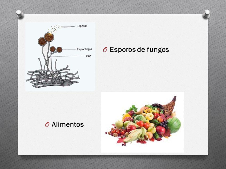 O Esporos de fungos O Alimentos