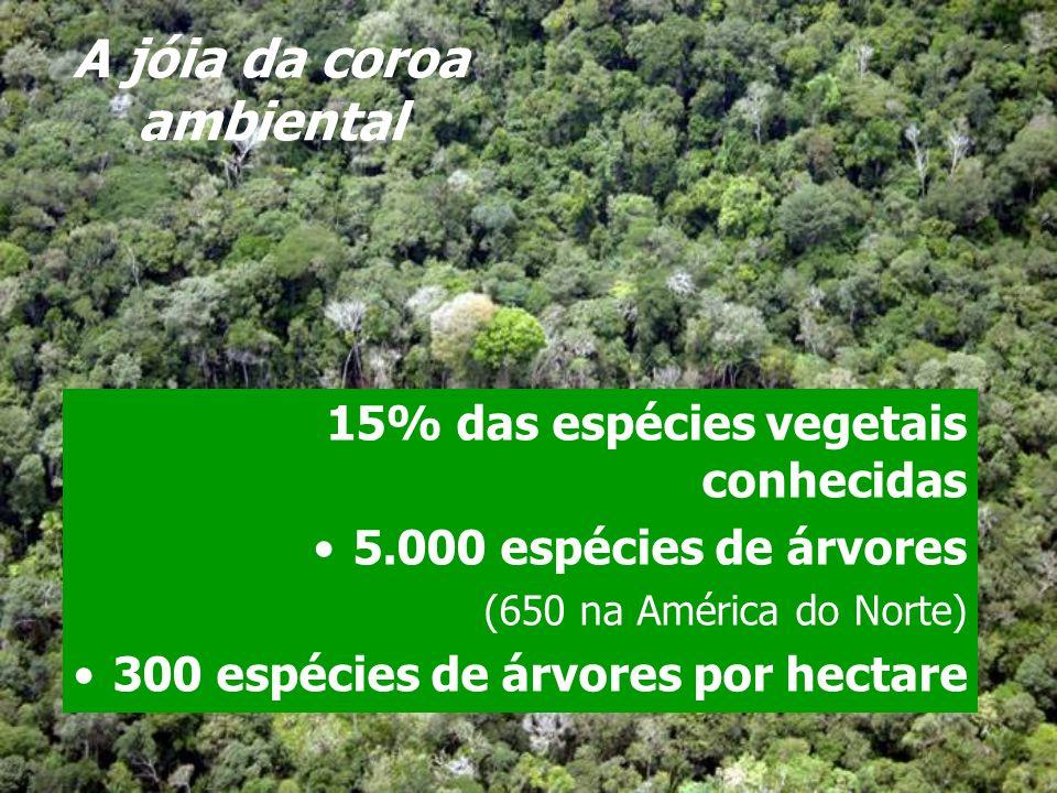 A jóia da coroa ambiental 15% das espécies vegetais conhecidas 5.000 espécies de árvores (650 na América do Norte) 300 espécies de árvores por hectare