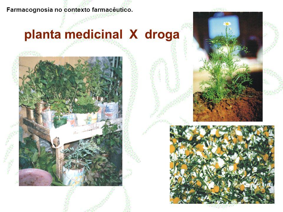 planta medicinal X droga Farmacognosia no contexto farmacêutico.