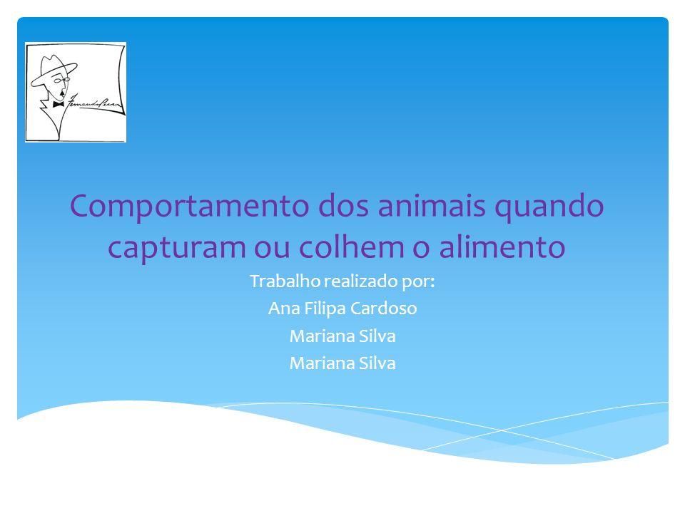 Comportamento dos animais quando capturam ou colhem o alimento Trabalho realizado por: Ana Filipa Cardoso Mariana Silva