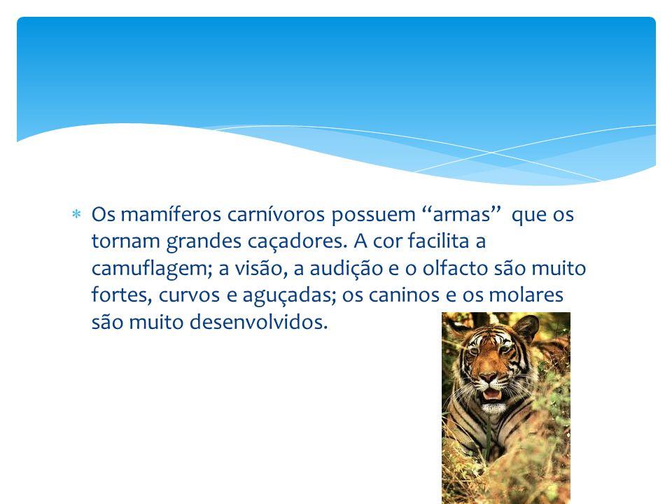 Os mamíferos carnívoros possuem armas que os tornam grandes caçadores. A cor facilita a camuflagem; a visão, a audição e o olfacto são muito fortes, c