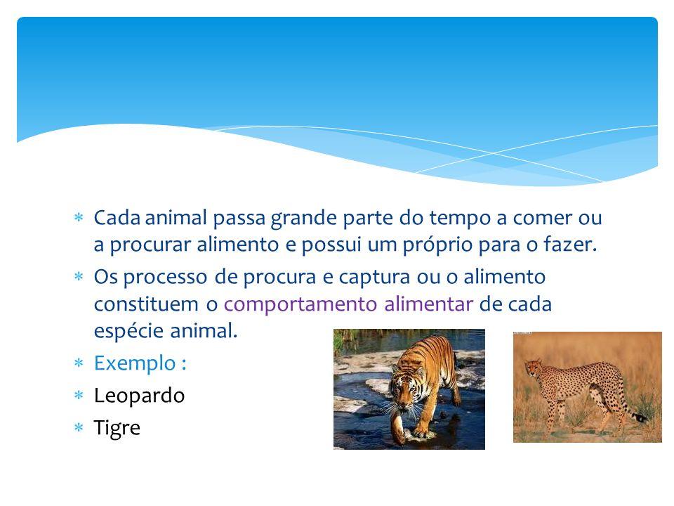 Cada animal passa grande parte do tempo a comer ou a procurar alimento e possui um próprio para o fazer. Os processo de procura e captura ou o aliment