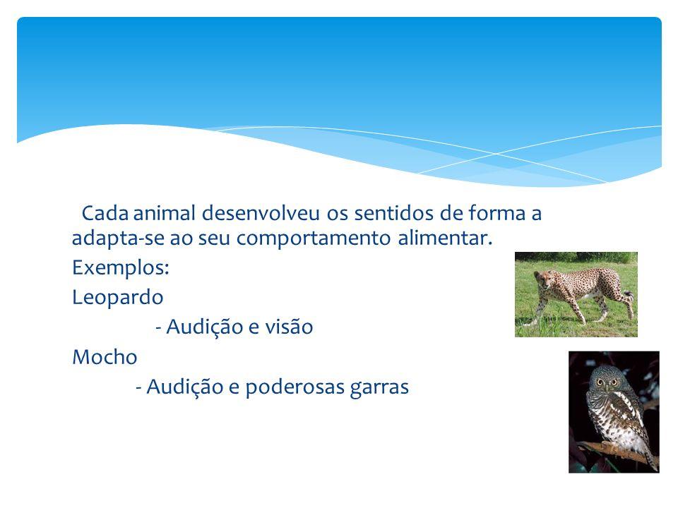 Cada animal desenvolveu os sentidos de forma a adapta-se ao seu comportamento alimentar. Exemplos: Leopardo - Audição e visão Mocho - Audição e podero