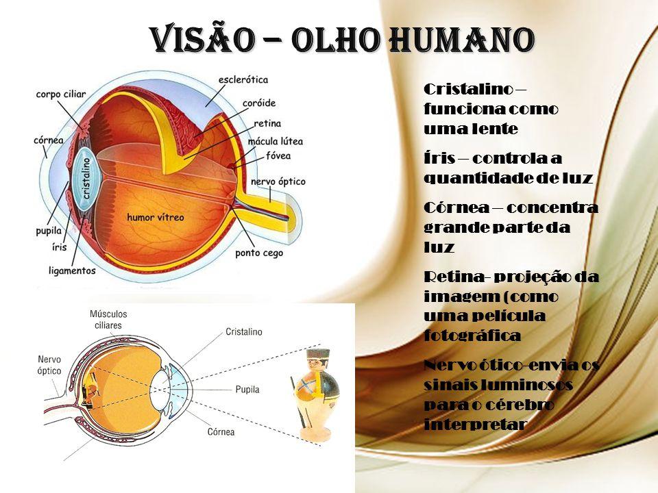 Visão – Olho Humano Cristalino – funciona como uma lente Íris – controla a quantidade de luz Córnea – concentra grande parte da luz Retina- projeção da imagem (como uma película fotográfica Nervo ótico-envia os sinais luminosos para o cérebro interpretar