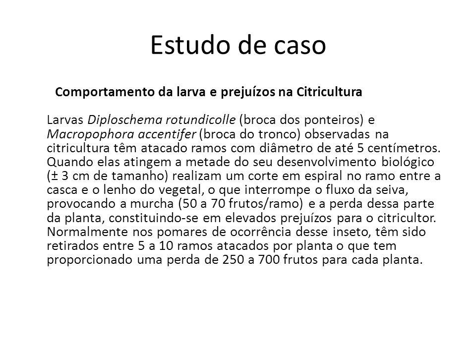 Estudo de caso Comportamento da larva e prejuízos na Citricultura Larvas Diploschema rotundicolle (broca dos ponteiros) e Macropophora accentifer (bro