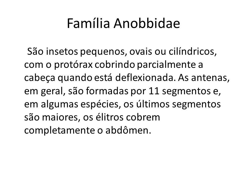 Família Anobiidae Encontram-se em diversas partes do mundo em produtos armazenados secos de origem vegetal ou animal; muitos são broqueadores de madeira, por exemplo, o Anobium puncatum (Dgeer) pode ser encontrado em armazéns ou graneleiros com estruturas de madeira.