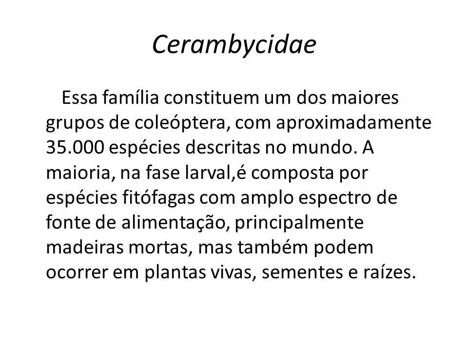 Cerambycidae Essa família constituem um dos maiores grupos de coleóptera, com aproximadamente 35.000 espécies descritas no mundo. A maioria, na fase l