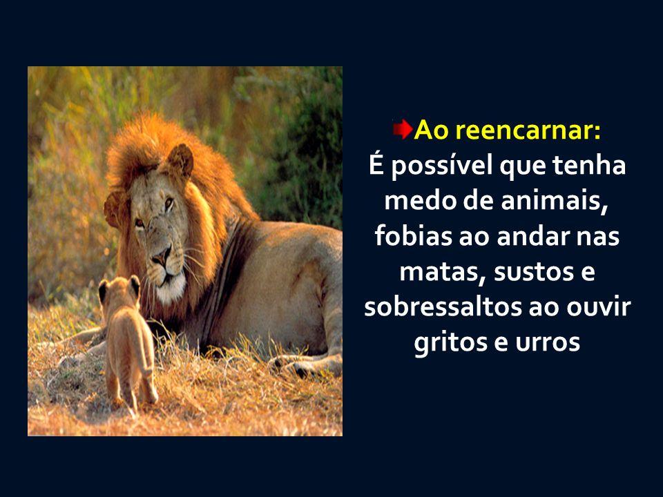 Ao reencarnar: É possível que tenha medo de animais, fobias ao andar nas matas, sustos e sobressaltos ao ouvir gritos e urros