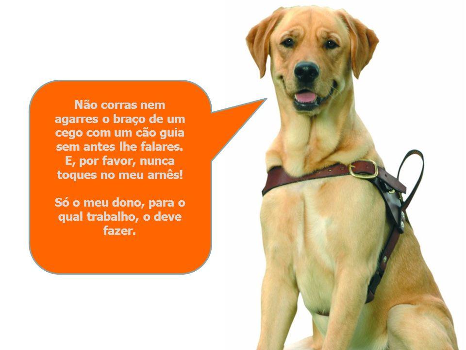 Se um cego com um cão guia te pedir que lhe indiques uma direcção, dá-lhe indicações claras sobre o sentido para o qual ele se deve voltar ou seguir p