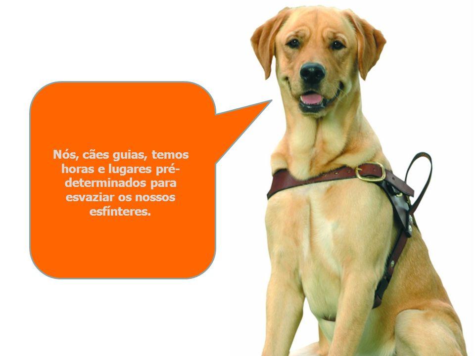 Não corras nem agarres o braço de um cego com um cão guia sem antes lhe falares. E, por favor, nunca toques no meu arnês! Só o meu dono, para o qual t