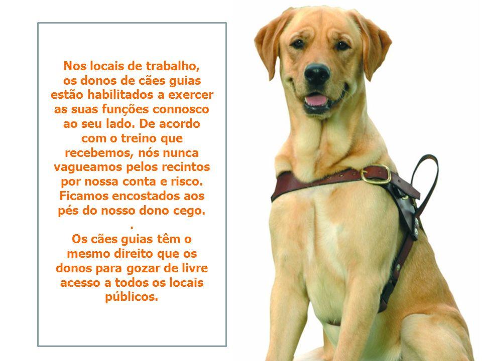 Dado o rigoroso treino que temos, nós, cães guias, estamos habituados e habilitados a aceder e permanecer junto aos nossos donos em qualquer tipo de e