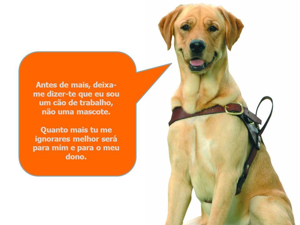 Olá! Sou um cão guia e quero ensinar-te como deves actuar quando te encontrares comigo em companhia do meu dono cego.