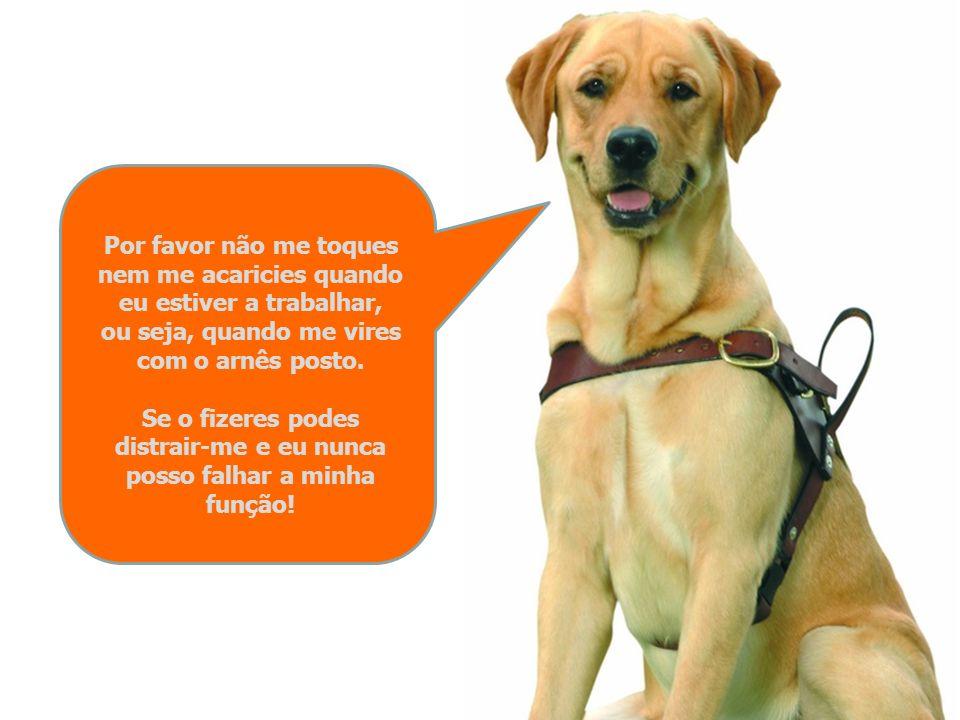 O meu comportamento e a minha forma de estar são totalmente diferentes da dos outros cães e a minha dupla função de guia e de companheiro do meu dono