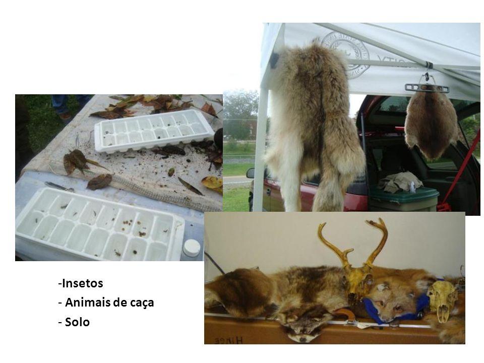 -Insetos - Animais de caça - Solo