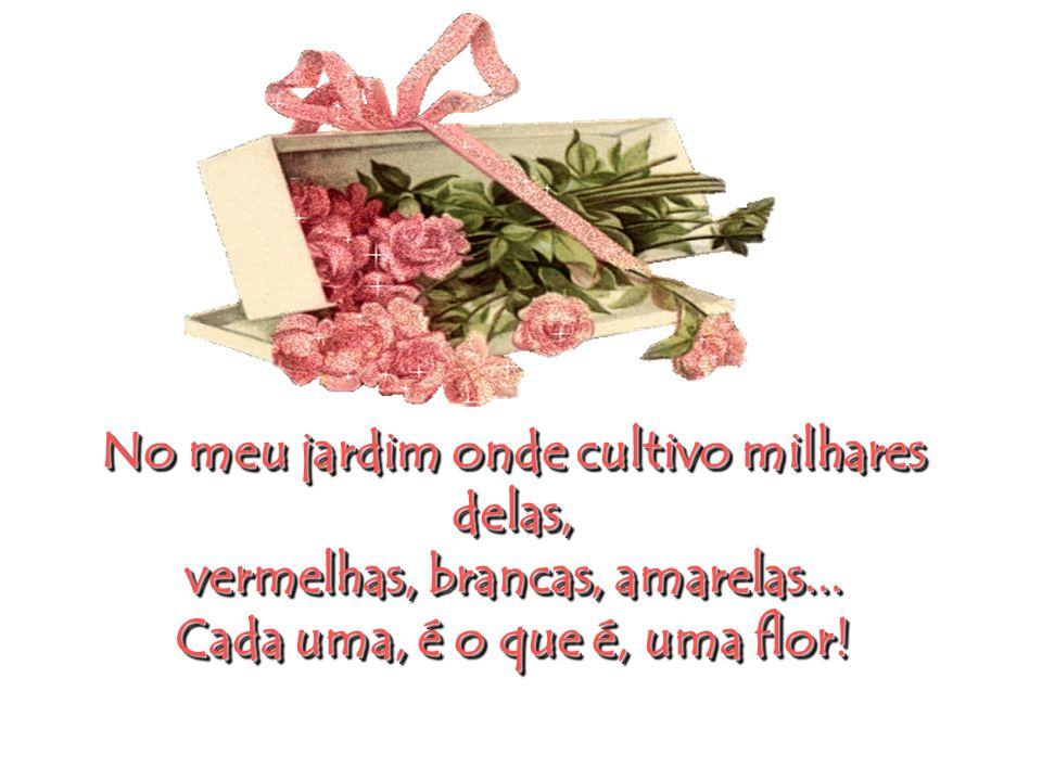Rosas, para o Valentine`s Day! Rosas, para o Valentine`s Day!