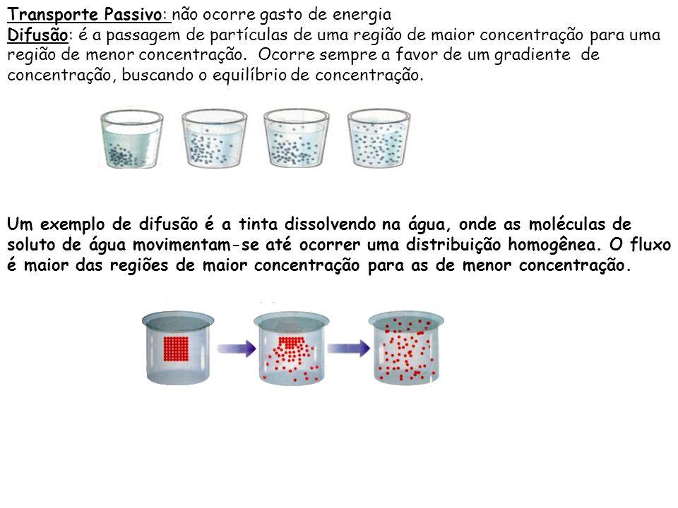 Quando duas soluções têm a mesma concentração = ISOTÔNICAS OU ISOSMÓTICAS. hipertônicahipotônica Quando as concentrações são diferentes, a solução + c