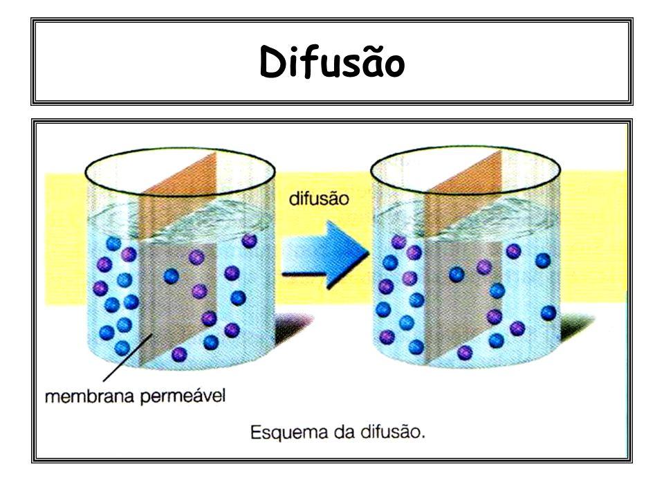 Difusão simples: Ex: transporte de O 2 e CO 2. Difusão facilitada: É um tipo de transporte que obedece às leis da difusão, mas que depende da particip