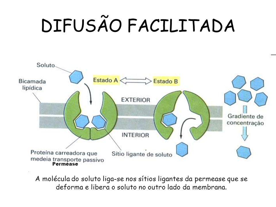 2.Difusão facilitada: é a passagem de substâncias de um meio mais concentrado para um meio menos concentrado com o auxílio de um carregador. Ex.: a gl