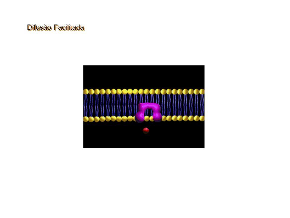 DIFUSÃO FACILITADA Permease A molécula do soluto liga-se nos sítios ligantes da permease que se deforma e libera o soluto no outro lado da membrana.