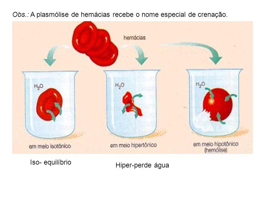 Continuação: num processo chamado DEPLASMÓLISE. A célula é mantida nesta solução e ganha aumento de volume, num processo chamado TURGÊNCIA (incha ), c