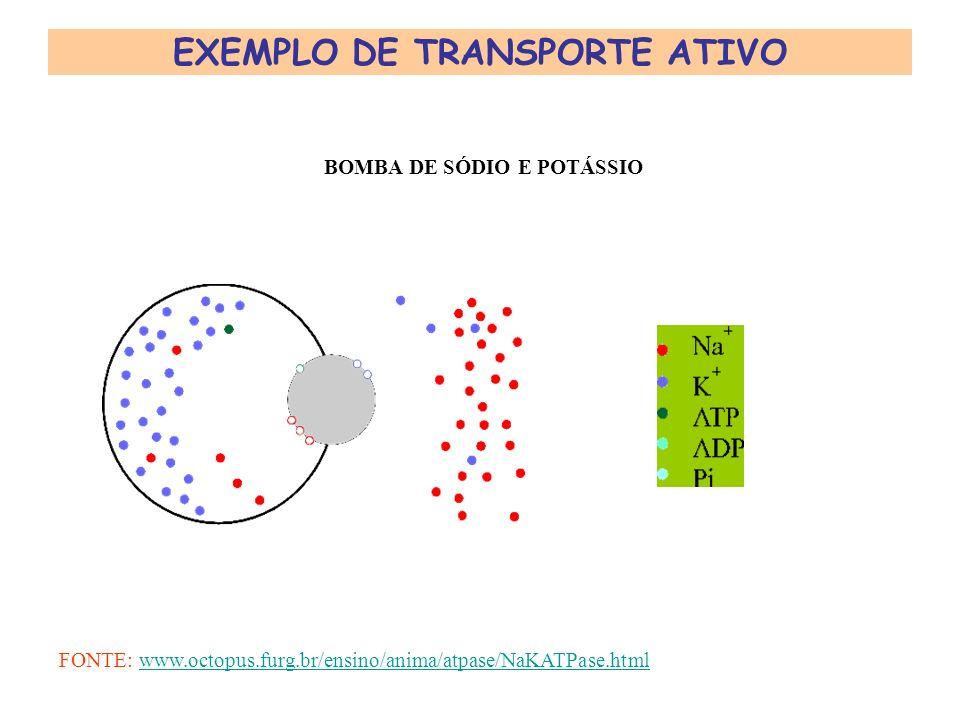 TRANSPORTE ATIVO Ocorre contra o gradiente de concentração. É feito por proteínas transmembrana chamadas ATPases ou BOMBAS. Quebram ATP e liberam ener