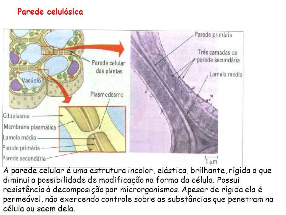 Glicocálix (glico=açúcar; calix= envoltório) é um envoltório externo à membrana e ocorre nas céls zoo e alguns protistas, como as amebas. È compostos