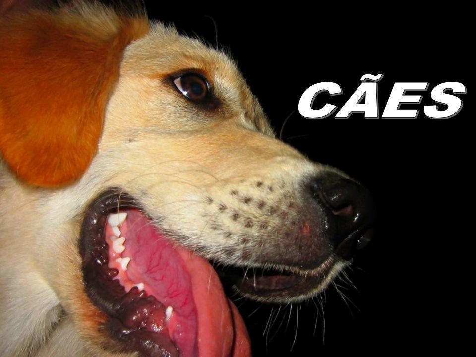 Pode-se dizer qualquer tolice a um cão e ele olhará de uma maneira que parece dizer: Por Deus, você tem razão.