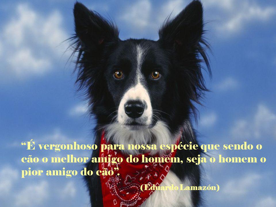 Cada criança deveria ter duas coisas: um cão e uma mãe que lhe deixe ter um