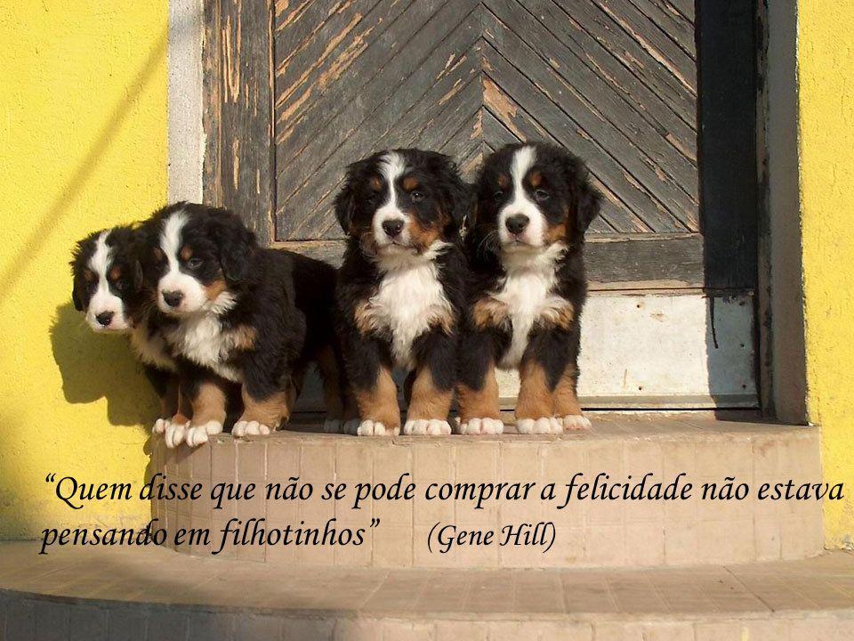 O cão sabe, mas não sabe que sabe (Pierre Teilhard de Chardin)