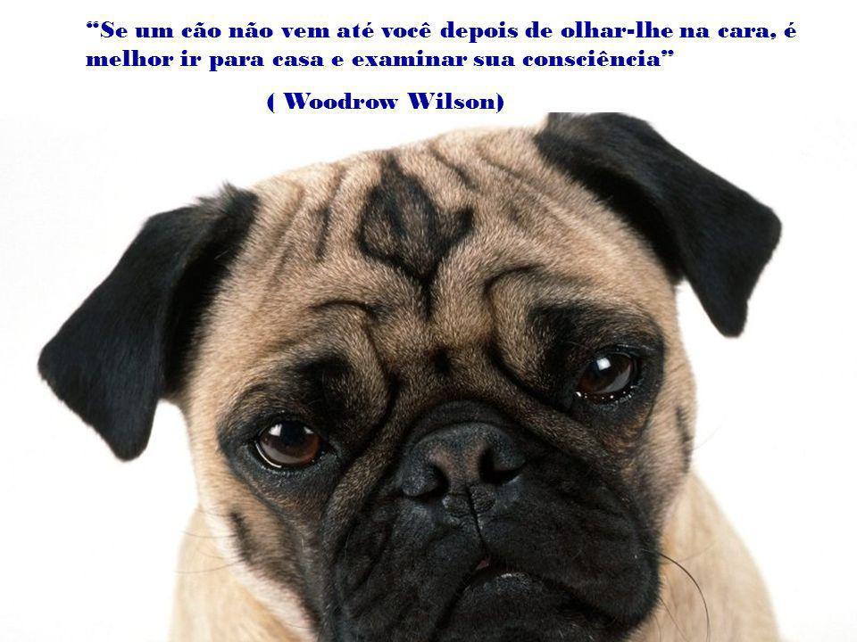 Pode-se viver sem um cão, mas não vale a pena. (Heinz Rühmann)