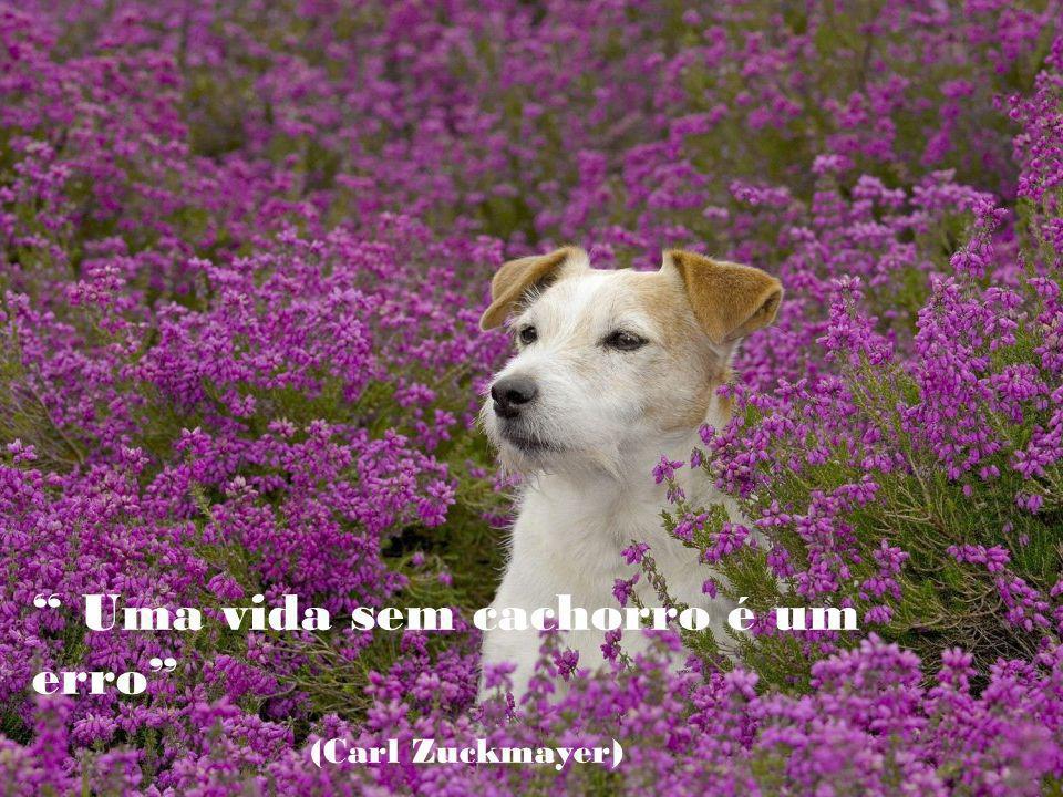 É vergonhoso para nossa espécie que sendo o cão o melhor amigo do homem, seja o homem o pior amigo do cão.