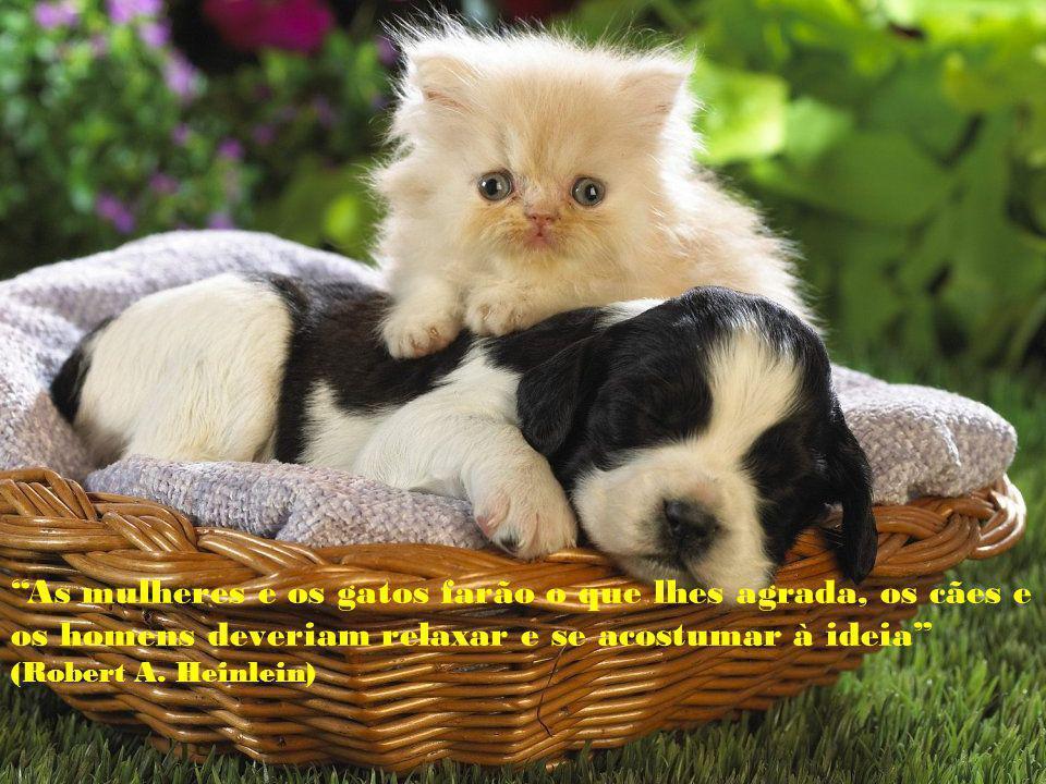 As mulheres e os gatos farão o que lhes agrada, os cães e os homens deveriam relaxar e se acostumar à ideia (Robert A.