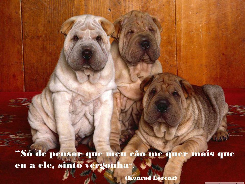 Os cães não são tudo em nossa vida, mas eles a tornam completa (Roger Caras)