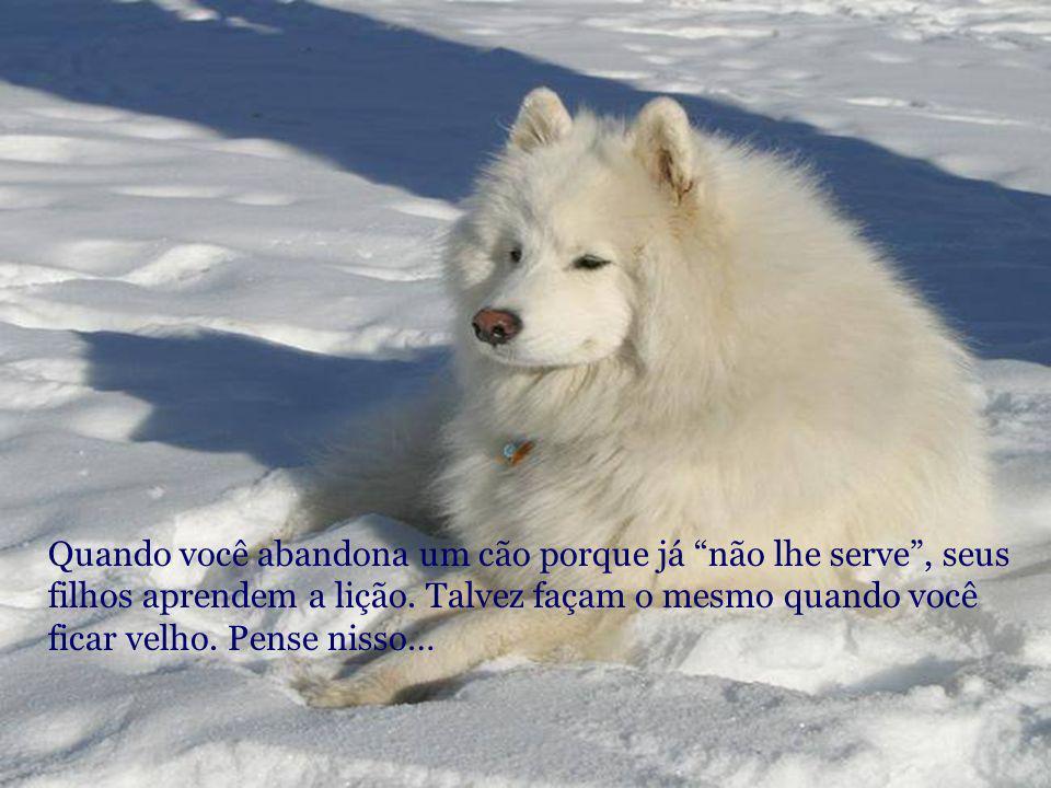 O amor pelos animais eleva o nível cultural do povo. (F. Salvochea)