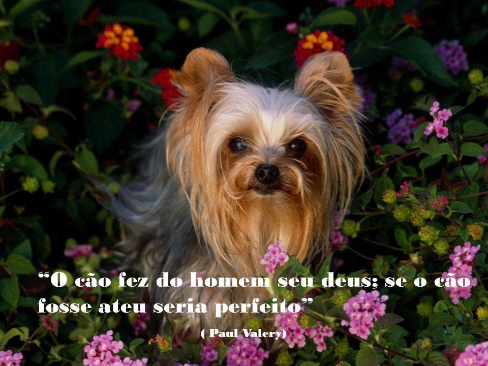 Em algum lugar sob a chuva, sempre haverá um cão abandonado que lhe impedirá de ser feliz ( Aldous Huxley )