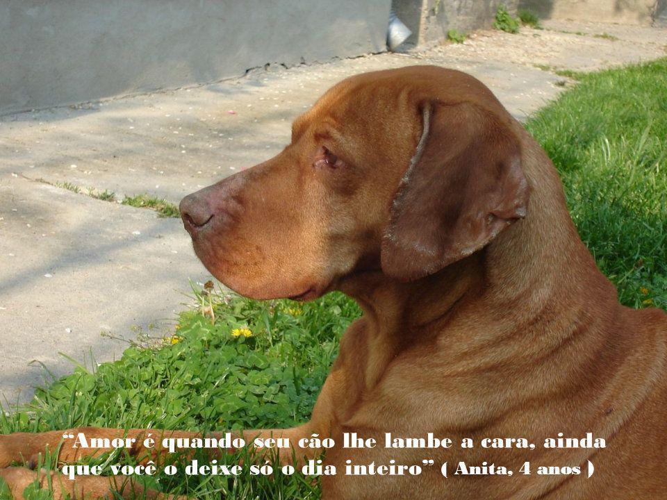O cão fez do homem seu deus; se o cão fosse ateu seria perfeito ( Paul Valery)