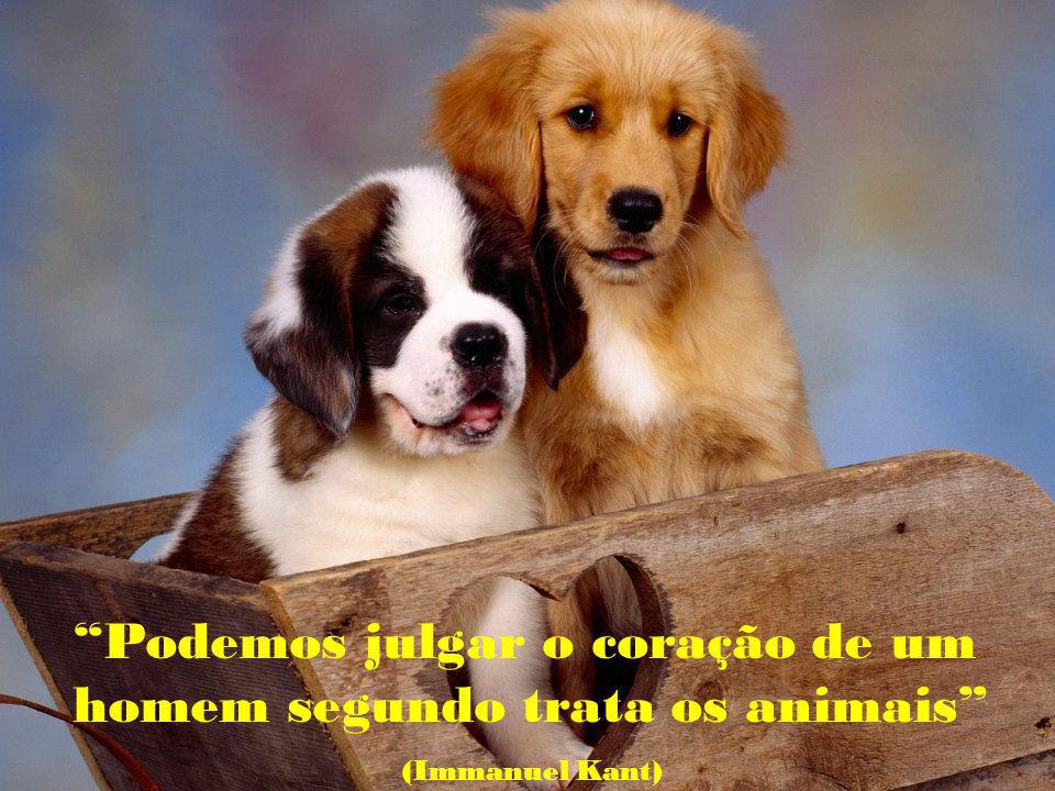Podemos julgar o coração de um homem segundo trata os animais (Immanuel Kant)