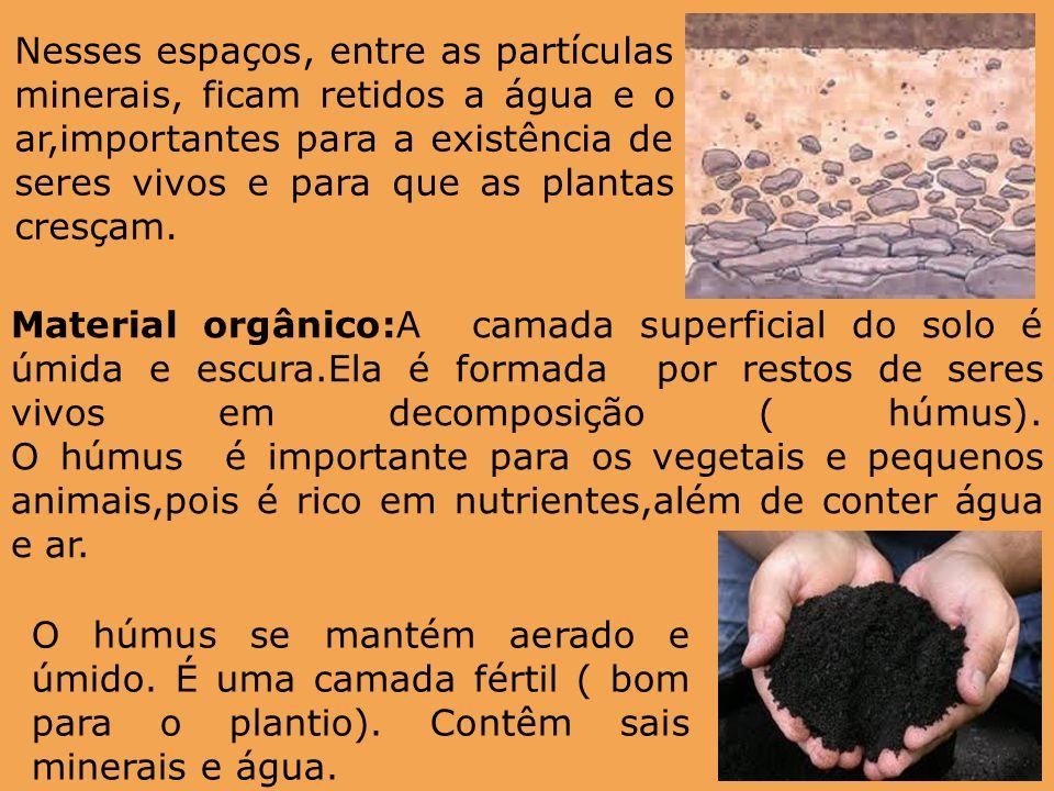 Nesses espaços, entre as partículas minerais, ficam retidos a água e o ar,importantes para a existência de seres vivos e para que as plantas cresçam.