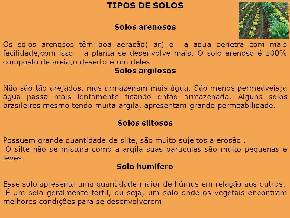 TIPOS DE SOLOS Solos arenosos Os solos arenosos têm boa aeração( ar) e a água penetra com mais facilidade,com isso a planta se desenvolve mais. O solo