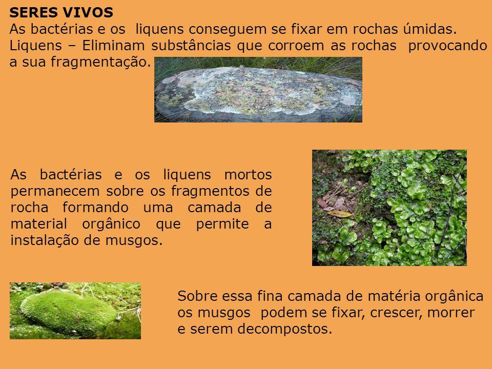 As bactérias e os liquens mortos permanecem sobre os fragmentos de rocha formando uma camada de material orgânico que permite a instalação de musgos.