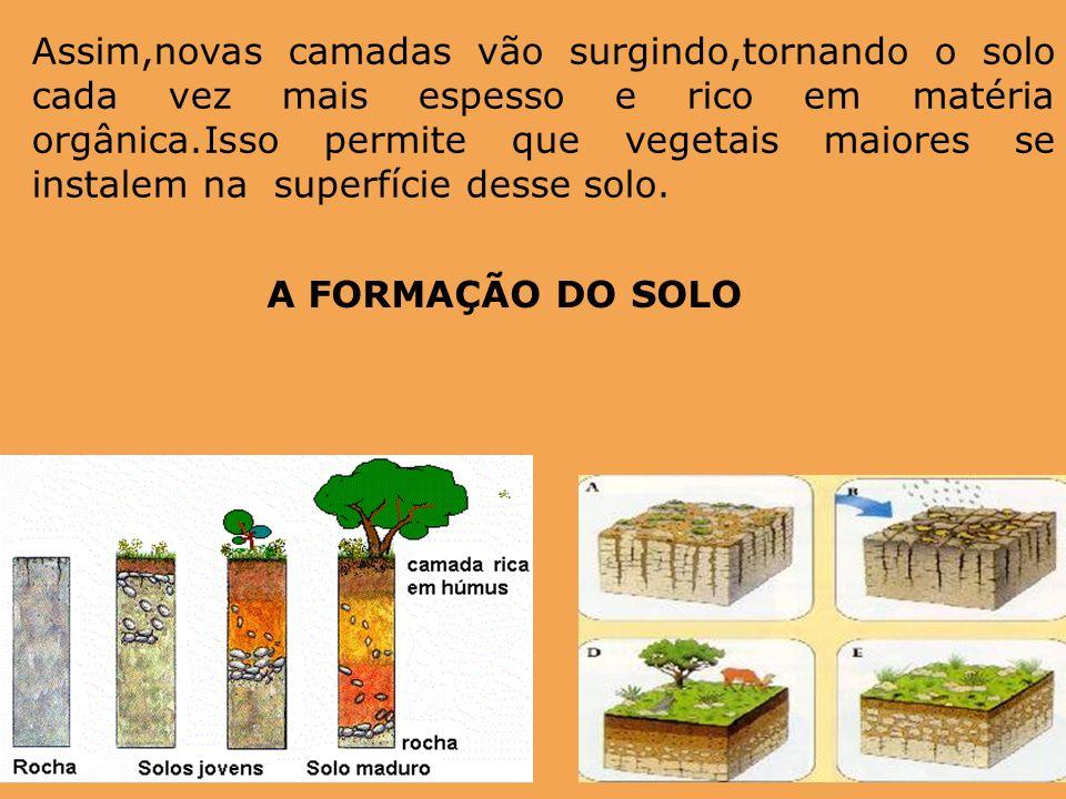 Assim,novas camadas vão surgindo,tornando o solo cada vez mais espesso e rico em matéria orgânica.Isso permite que vegetais maiores se instalem na sup