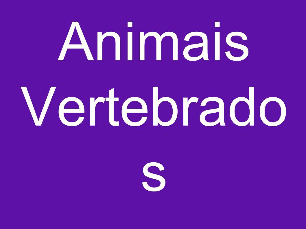 Animais Vertebrado s