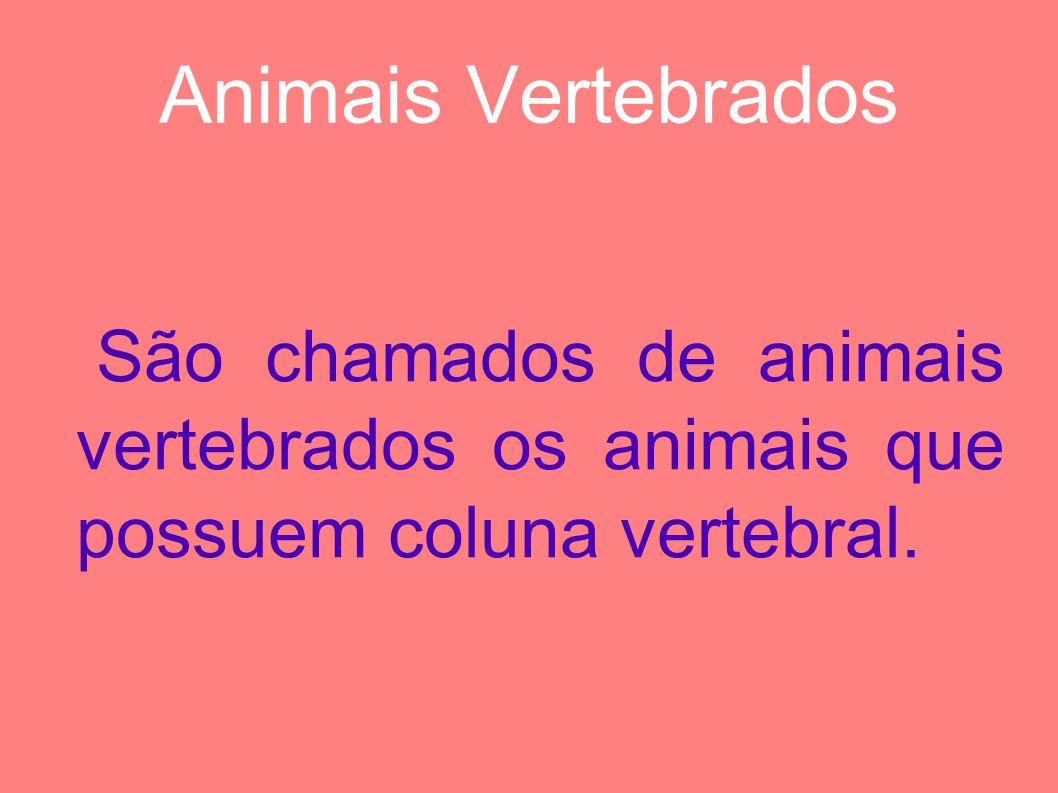 Animais Vertebrados São chamados de animais vertebrados os animais que possuem coluna vertebral.